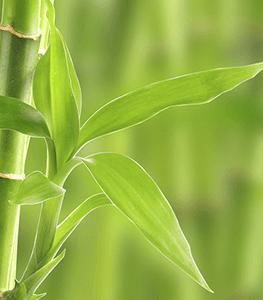 Lezione di business dal bambù - Egidio Murru @ sickbrain.org